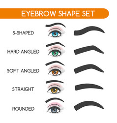 Women eyebrows shapes set vector