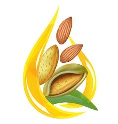 almond oil vector image