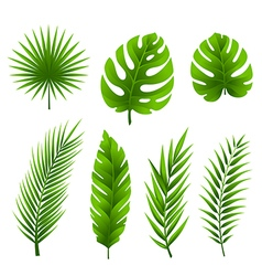 Tropical palm tree leaves collection vector image vector image