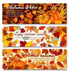 Autumn pumpkin with fallen leaf banner set design vector