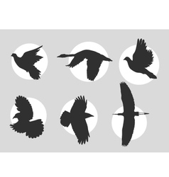 Bird in flight silhouette vector