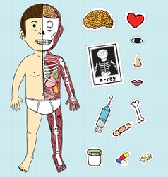 Boy body anatomy vector