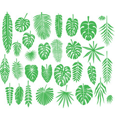 Set of silhouettes tropical leaves vector