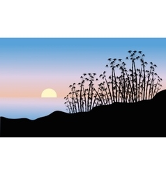 Bamboo tree of silhouette vector image