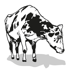 Spotted Milk Cow vector image vector image