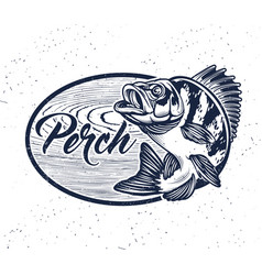 eurasian river perch fishperch fishing club vector image