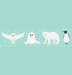 White bear owl king penguin emperor aptenodytes vector