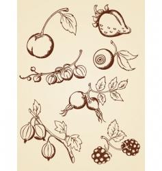 hand drawn vintage berries vector image vector image