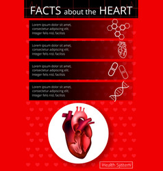 infographics heart 2 vector image vector image