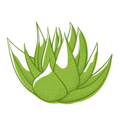 Aloe leaves green icon beauty and nature vector
