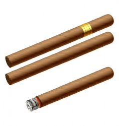cuban cigars vector image