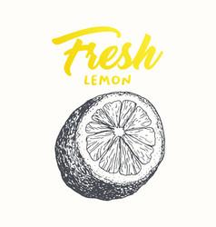 fresh lemon banner design vector image
