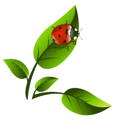 Leaf and Ladybug vector
