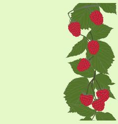 raspberries vertical seamless pattern vector image