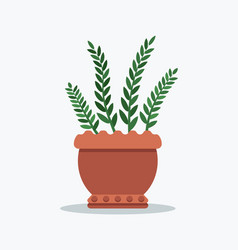 rosemary planted in flower pot vector image