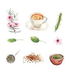Set watercolor and hand drawn herbal tea vector