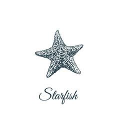 starfish sketch hand drawing vector image