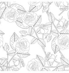 rose on white background vector image
