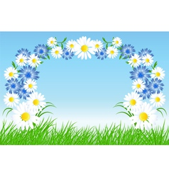 cornflowers and daisy vector image vector image