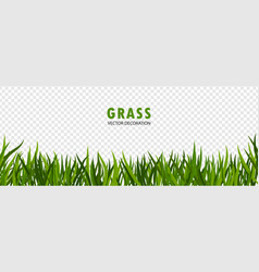 green grass on transparent vector image