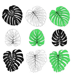 Monstera leaves set vector