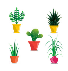 collection of room plants in pots vector image