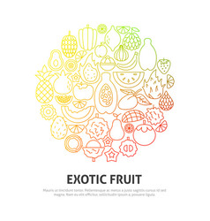 exotic fruit circle concept vector image