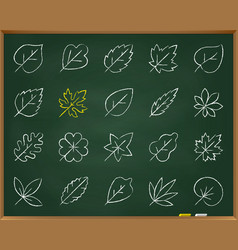 organic leaf chalk draw line icons set vector image