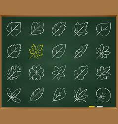 Organic leaf chalk draw line icons set vector