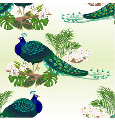 seamless texture peacock beauty exotic bird vector image
