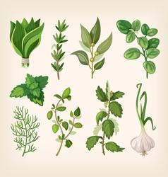 Seasoning and dressing herbs vector