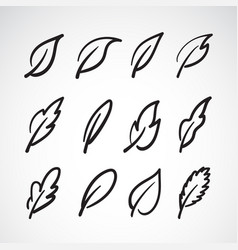 leaves icon set on white backgroundcollection of vector image vector image
