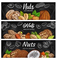 Almond peanut walnut and hazelnut nuts vector