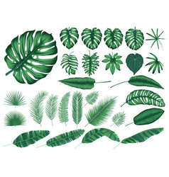 Detailed tropical leaves and plants collection vector