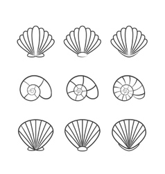 Set of sea shells isolated on a white background vector image
