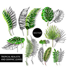 tropical realistic and graphic leaves elements vector image