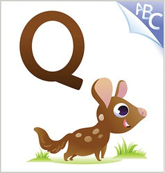 Animal alphabet for the kids Q for the Quoll vector image