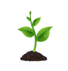 Green sprout with white background vector