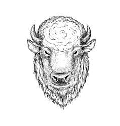 Head buffalo vector