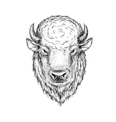Head of buffalo vector