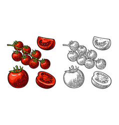 Set of hand drawn tomatoes branch whole and vector
