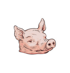 severed pink pig head isolated on white background vector image