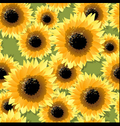 Sunflowers seamless pattern vector