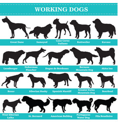 working dogs silhouettes vector image