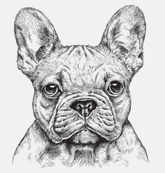 highly detailed hand drawn french bulldog i vector image vector image