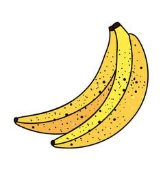 Bananas fresh fruits isolated icon vector