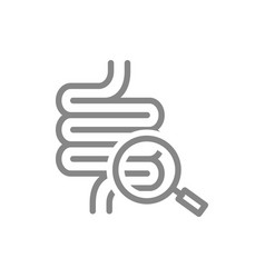Intestine with magnifying glass line icon organ vector
