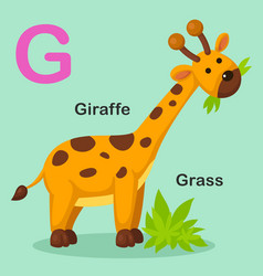 Isolated animal alphabet letter g-grass giraffe vector