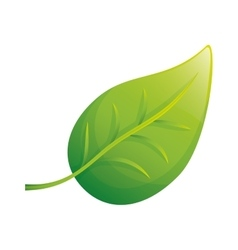 Isolated natural leaf vector