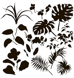 leaves silhouette vector image